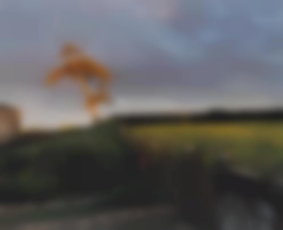 Sam Taylor-Johnson-Self Portrait As A Tree-2000