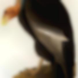 John James Audubon-After John James Audubon - California Vulture (Plate CCCCXXVI), 1838-1838