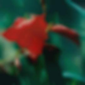 Thomas Struth-Pflanze No. 22, Rote Gladaiolen, Winterthur-1992