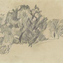 Pierre Bonnard-Etude Darbres-1930