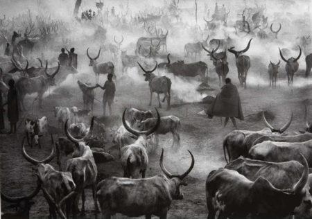 Sebastiao Salgado-Dinka Cattle Camp of Amak, Southern Sudan-2006