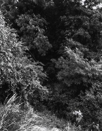 Andreas Gursky-Landschaft, Krefeld-1989