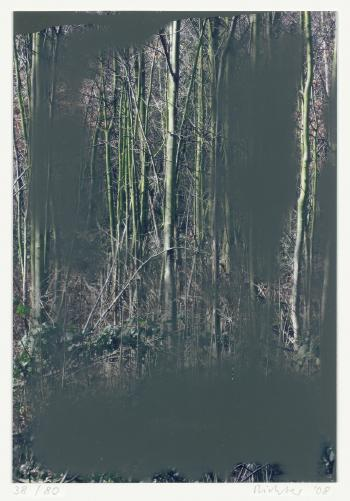 Gerhard Richter-Wald II (Grau / Grey)-2008