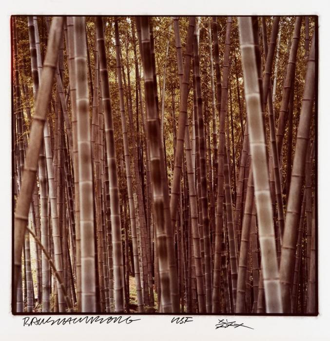 Robert Rauschenberg-Robert Rauschenberg - Bamboo-1983