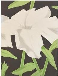 Alex Katz-White Petunia-1969