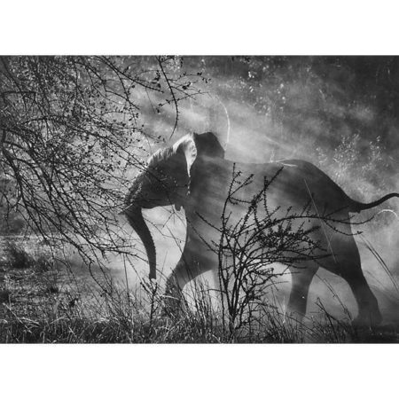 Sebastiao Salgado-Elephant, Zambia-2010