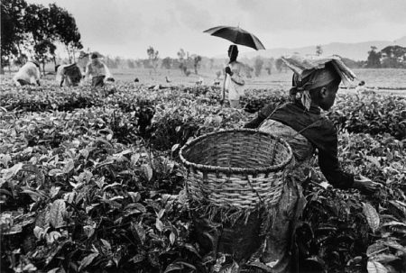 Sebastiao Salgado-Workers, Tea Plantation, Rwanda-1991