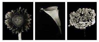 Chuck Close-Flowers - Calla Lily, Hydrangea and Sunflower-2007