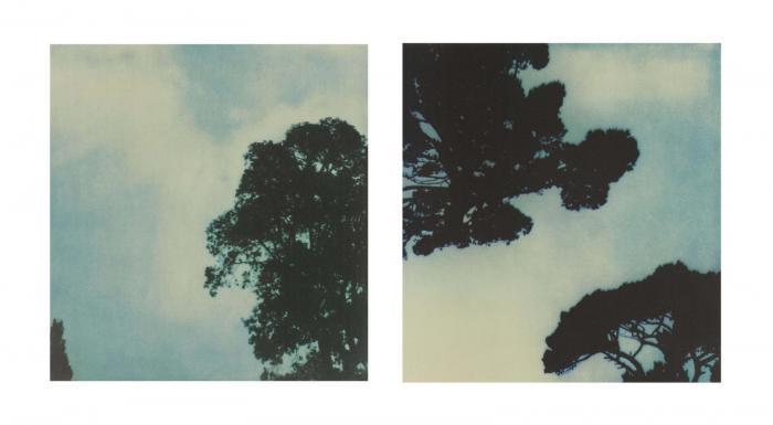 Cy Twombly-Trees (No. 1 & No. 3)-1986
