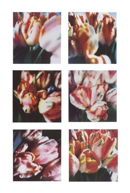 Cy Twombly-Tulips (III), No. 1-6-1985