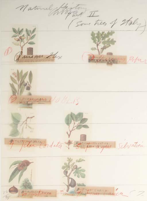 Cy Twombly-Natural History part II some Trees of Italy-1976