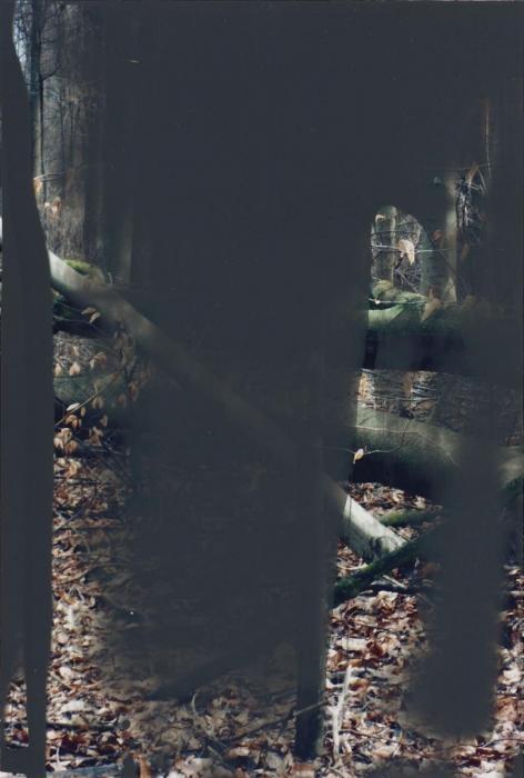 Gerhard Richter-Wald II (Grauwald)-2008