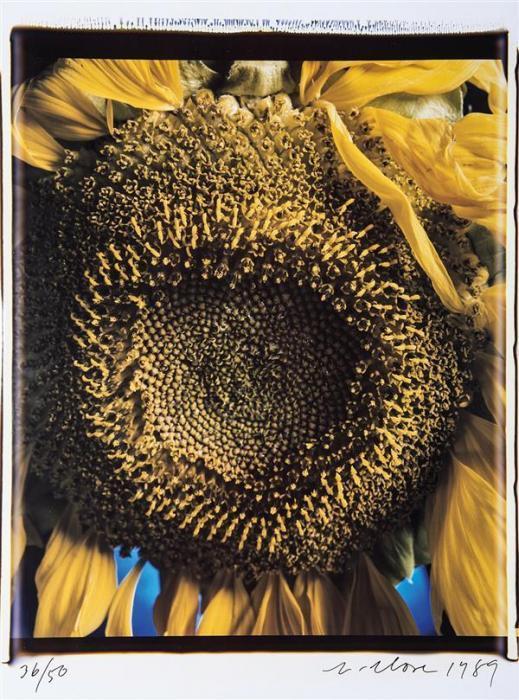 Chuck Close-Sunflower-1989