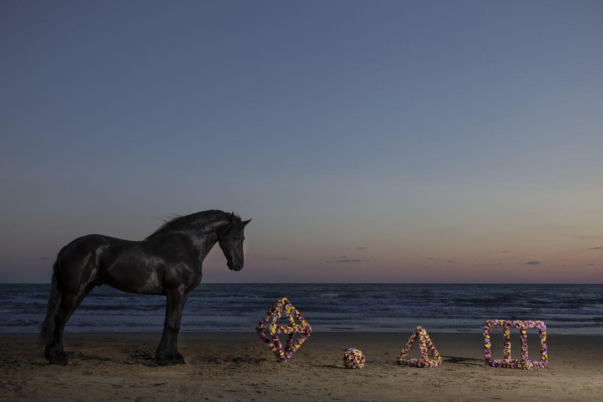 Vinci-Galesi - La terra dei fiori (Spiaggia), 2017