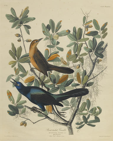 John James Audubon-After John James Audubon - Boat-Tailed Grackle (Pl. CLXXXVII)-1834