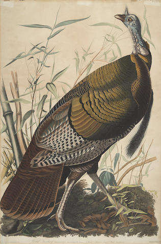 John James Audubon-After John James Audubon - Wild Turkey Male (Plate I)-1925