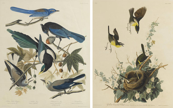 John James Audubon-After John James Audubon - Yellow-breasted Chat (Pl. CXXXVII); Yellow-billed Magpie Stellers Jay Ultramarine Jay and Clark's Crow (Pl. CCCLXII)-