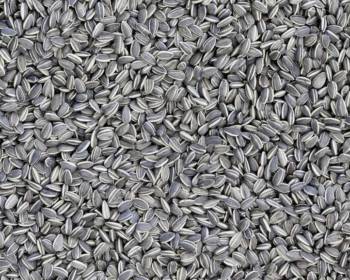 Ai Weiwei - Sunflower Seeds
