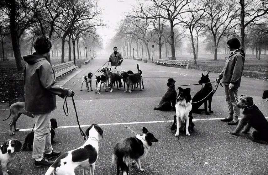 Alfred Eisenstaedt - Dog walking in Central Park in Monroe gallery, 1964 - Image via theredlistcom