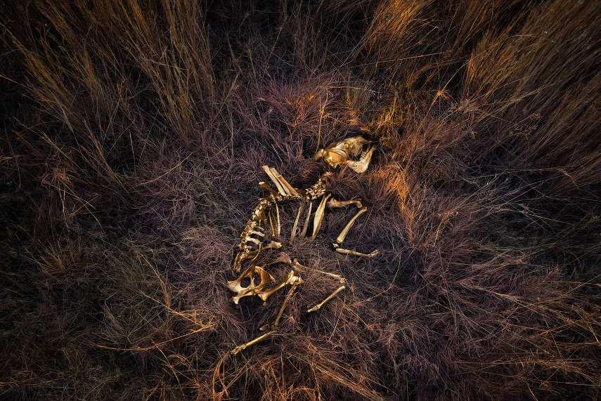 Alinka Echeverria - Cradle - Image © Alinka Echeverria