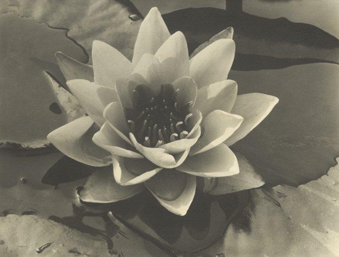Alma Lavenson-Waterlily-1932
