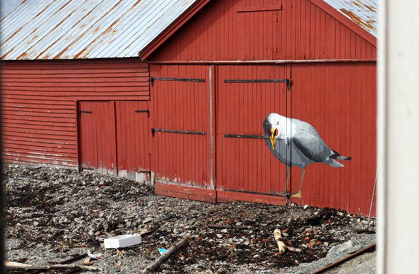 Anders Gjennestad - Seagull, Oslo, 2008