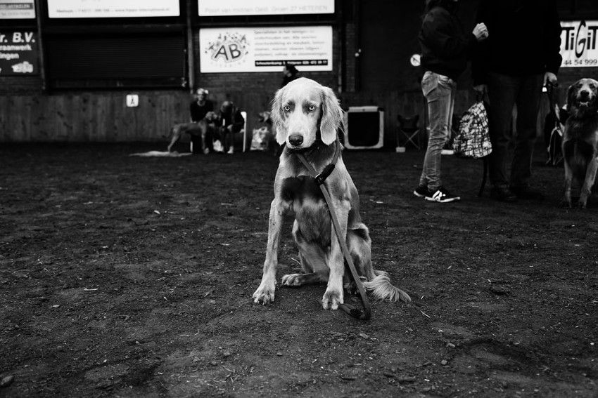Anne Barlinckhoff - Life's A Dogshow 1, book, dutch, talent, like, free