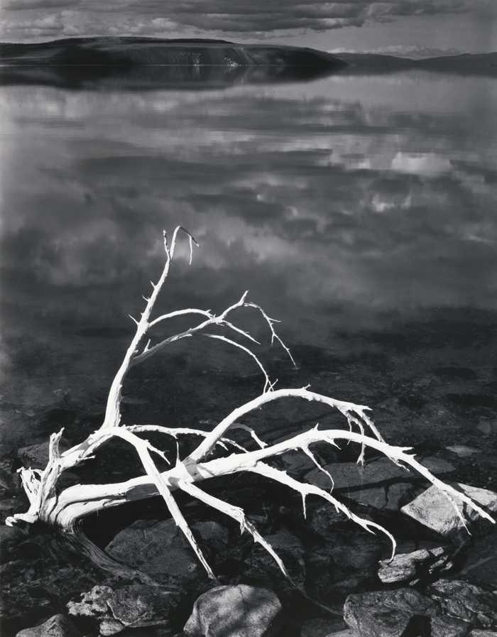Ansel Adams-White Branches Mono Lake California-1947
