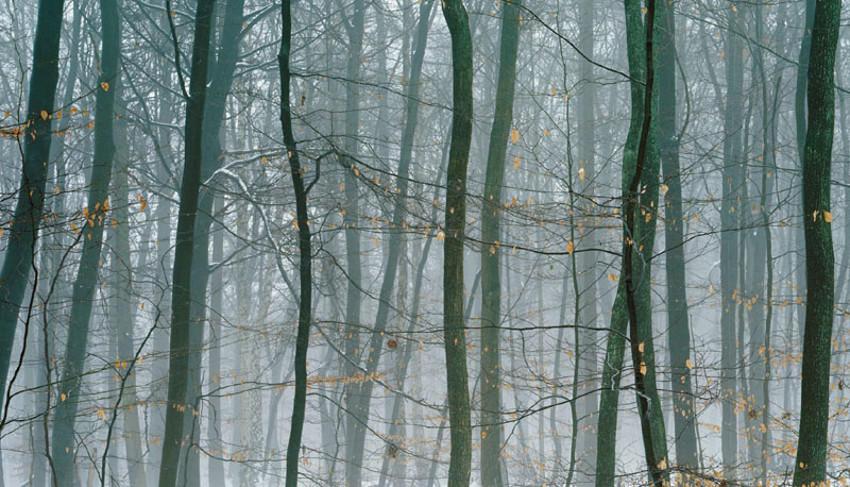 Niederwald-01, 2009