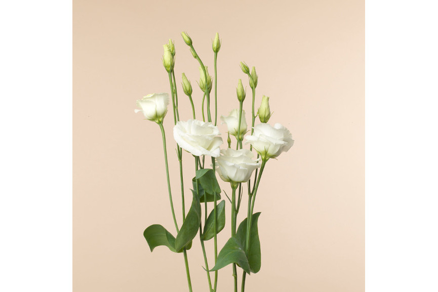 Babeth Montagnier - Offrande Petites fleurs 4072