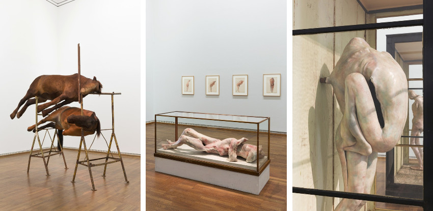 Berlinde De Bruyckere - Suture, installation view at the Leopold Museum, Vienna, Austria, 2016. Image credits Lisa Rastl, new exhibition at hauser and wirth along with new exhibitions in museum in 2015, latest museum shows