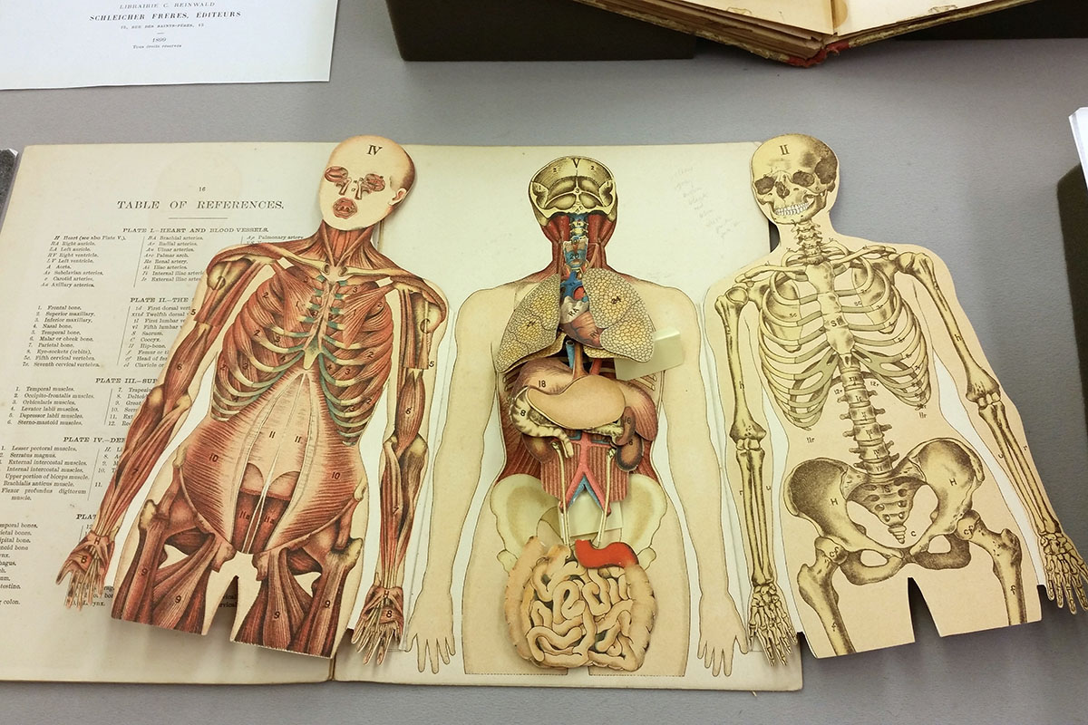 Ten Best Books on Animal and Human Anatomy for Artists | Widewalls