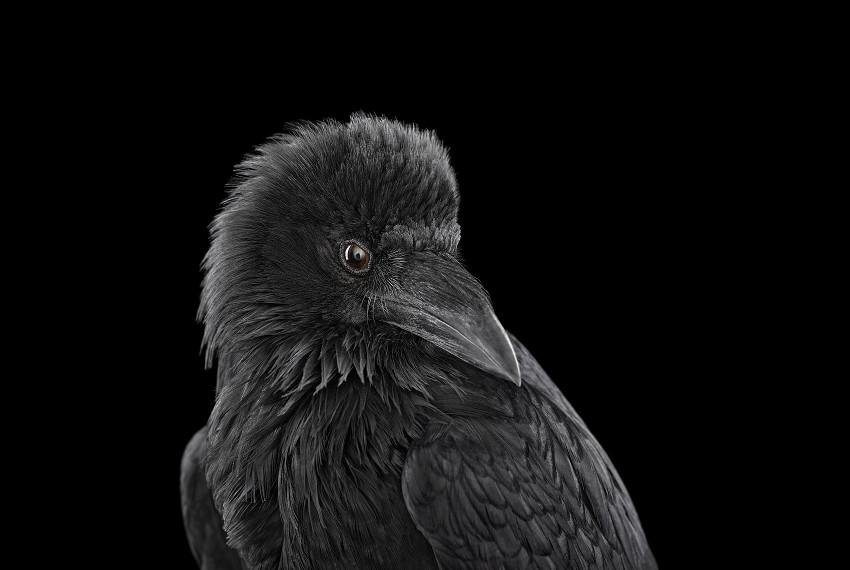 brad wilson animal photographs