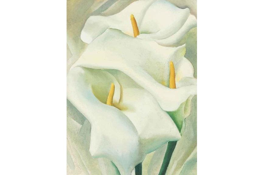 Calla Lilies, 1924