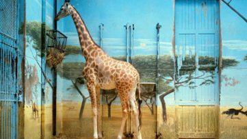 Candida Höfer - Zoologischer Garten Paris II, 1997
