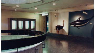 Candida Höfer - Zoologisches Museum Genf, 1989