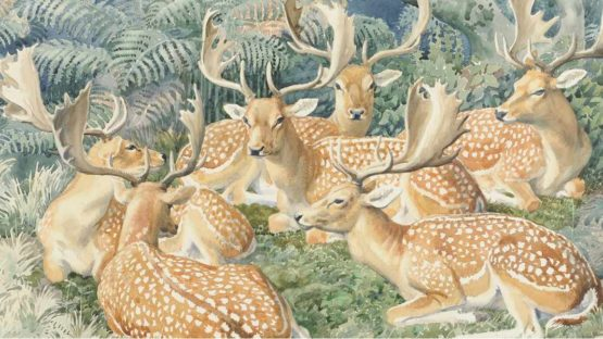Charles Frederick Tunnicliffe