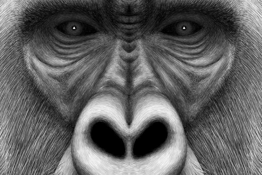Charlotte Quillet - Gorille morph, detail