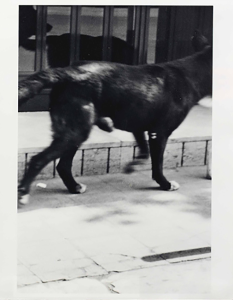 Christopher Wool-Untitled (Parkett 33)-1992