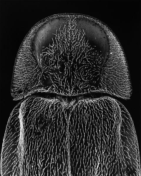 Claudia Fahrenkemper - 13-06-2 Head of a firefly,25x, 2006