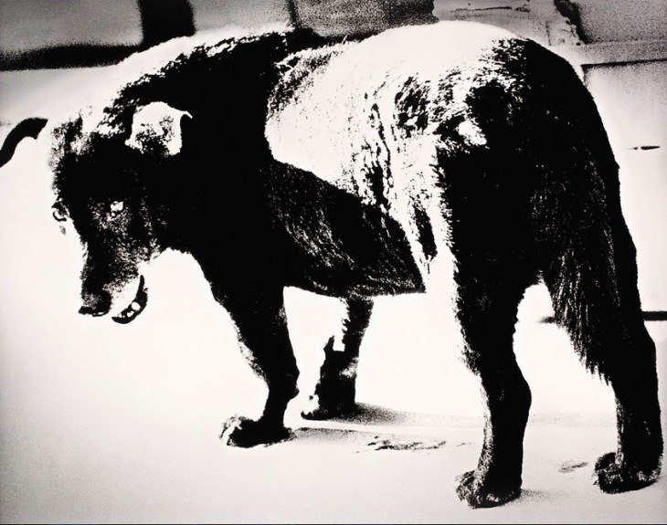 Daido Moriyama - Stray Dog (Lot 1008). Estimated at $9,029-$11,608; sold for $10,963