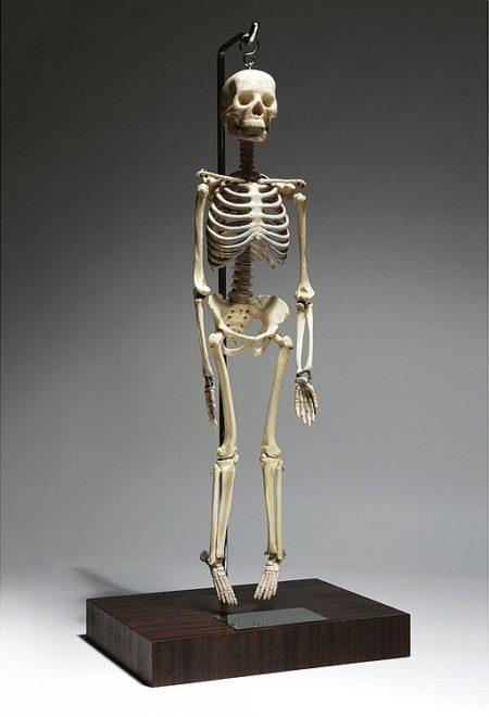Damien Hirst-Baby Pharmacy Skeleton-2004