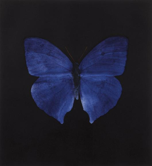 Damien Hirst-Blue Butterfly-2008
