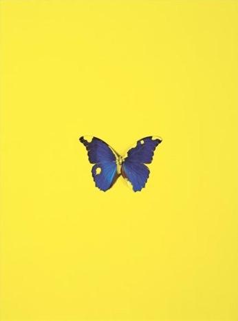 Damien Hirst-Love Bird, Spring-2008