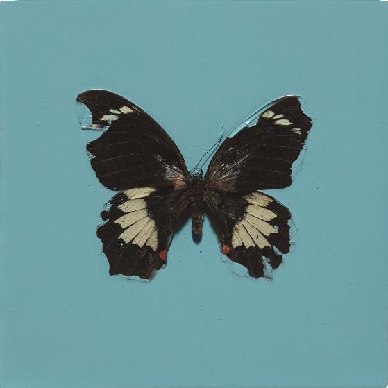 Damien Hirst-Love is a Stranger-2004