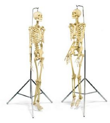 Damien Hirst-Male and Female Pharmacy Skeletons-1998