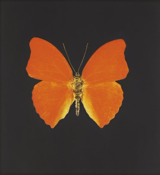 Damien Hirst-Orange Butterfly with Red Tips-2008