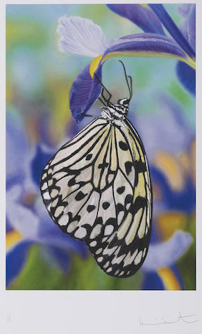 Damien Hirst-Paper Kite Butterfly on Spanish Iris-2011