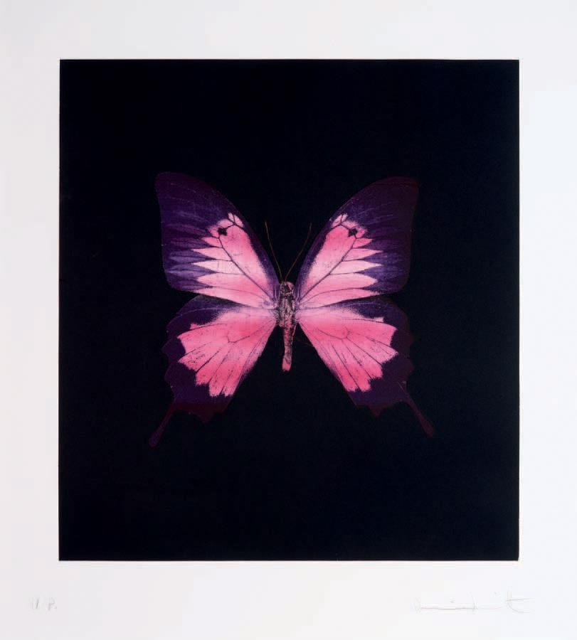 Damien Hirst-Purple Butterfly-