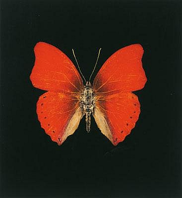 Damien Hirst-Red Butterfly-2008